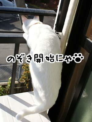 cat770