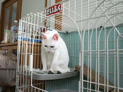 cat771