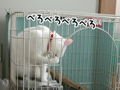 cat772
