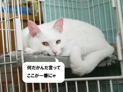 cat773