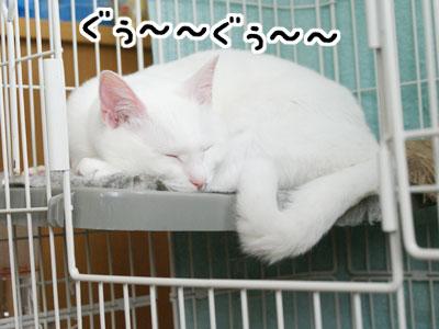 cat774