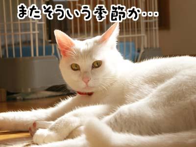 cat775
