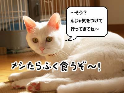 cat776