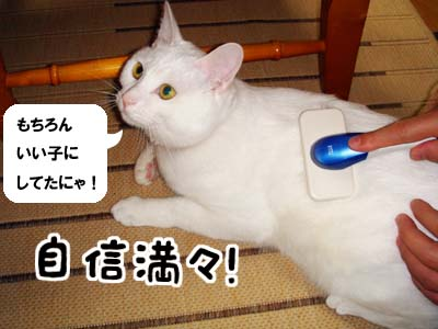 cat779