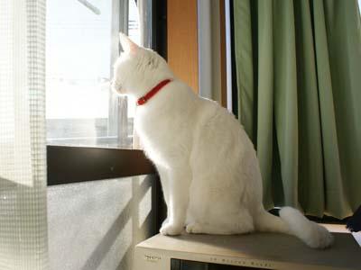 cat789