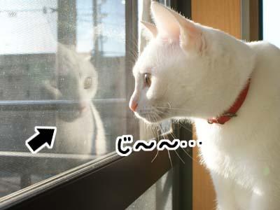 cat790