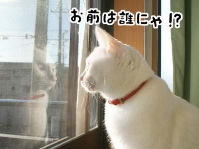 cat791