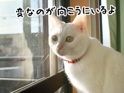 cat792