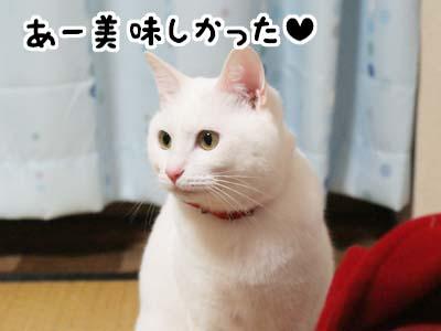 cat797