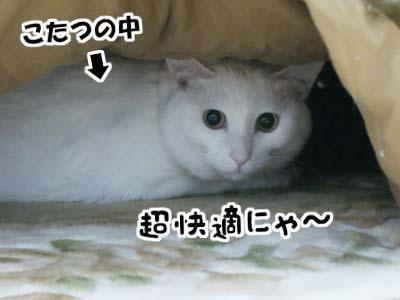 cat798