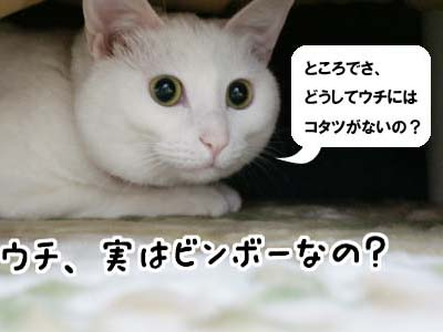 cat799