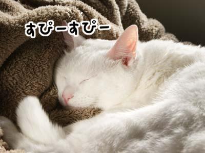 cat800