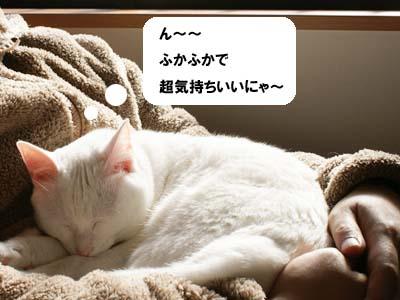 cat801