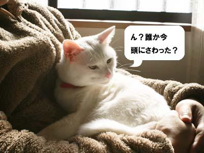 cat803