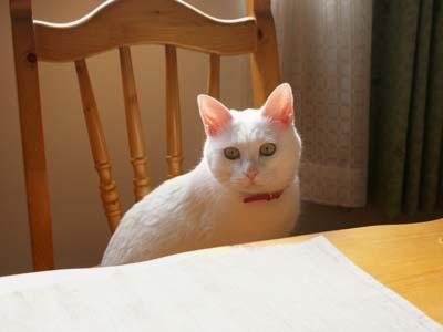cat804