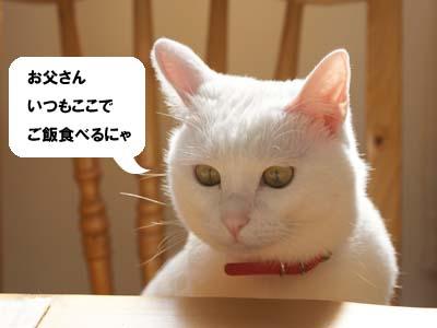 cat805