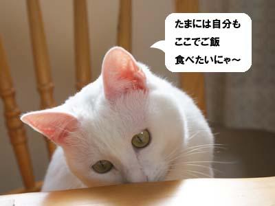 cat806