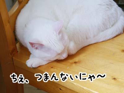 cat807