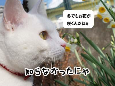 cat809