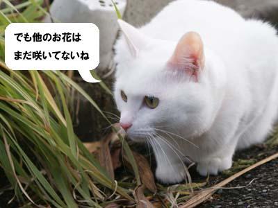 cat810