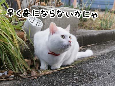 cat811