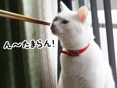 cat814