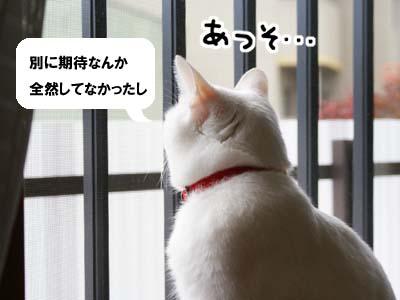 cat815
