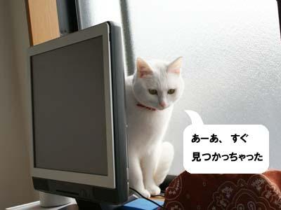 cat821