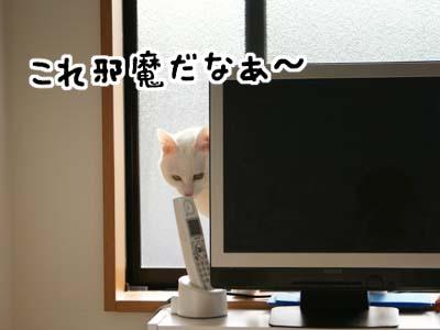 cat823