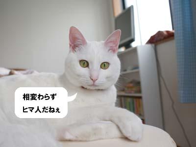 cat826