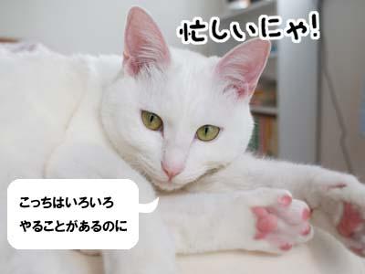 cat827