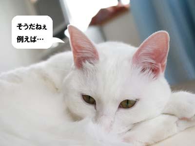 cat828