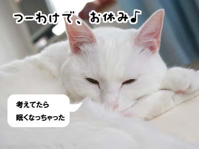 cat829
