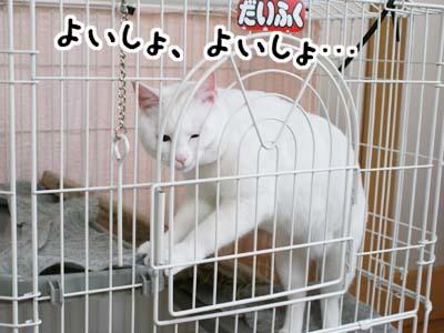 cat831