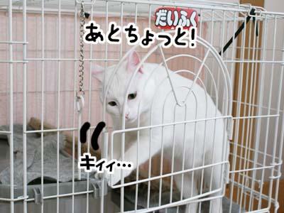 cat832