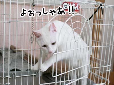 cat833