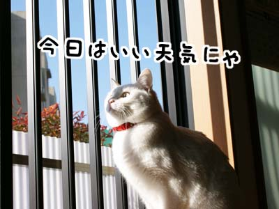 cat835