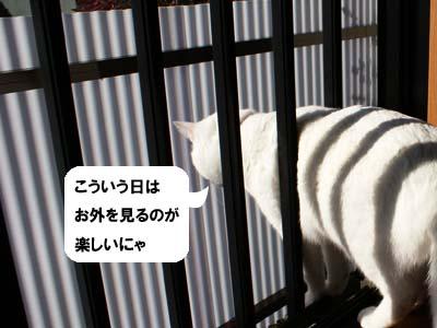 cat836