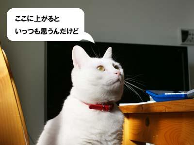 cat838