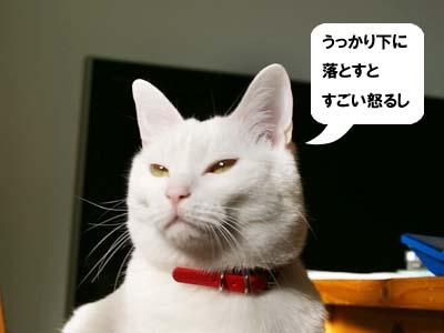 cat841