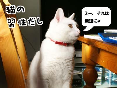 cat842