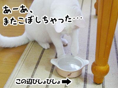 cat843