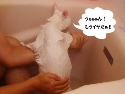 cat853