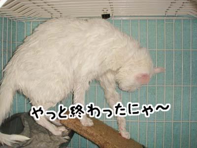 cat854