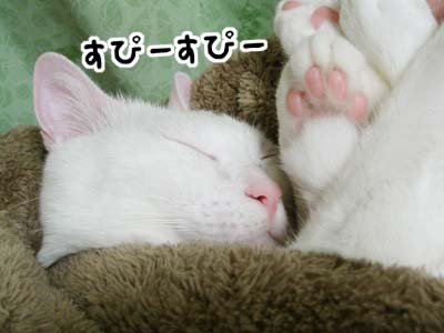 cat856