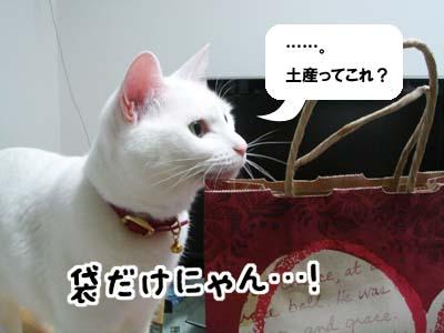 cat860