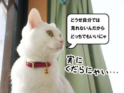 cat865