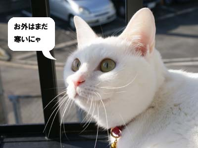 cat868