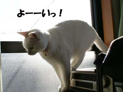 cat873