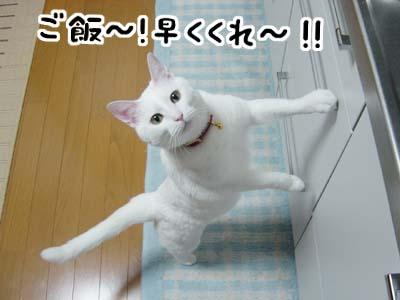 cat881